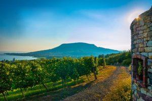 szőlőbirtok Káli-medence